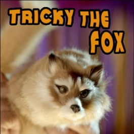 Tricky the Fox + Teaching DVD Combo