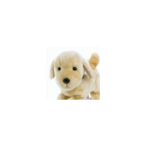 Labrador Toy Dog
